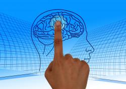 Praktisko nodarbību cikls. Cilvēka prāta anatomija.